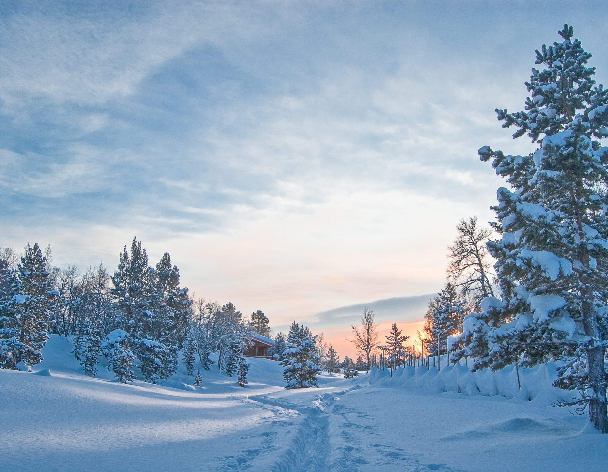Godt nytt år. Foto: Ren Røros Frontal